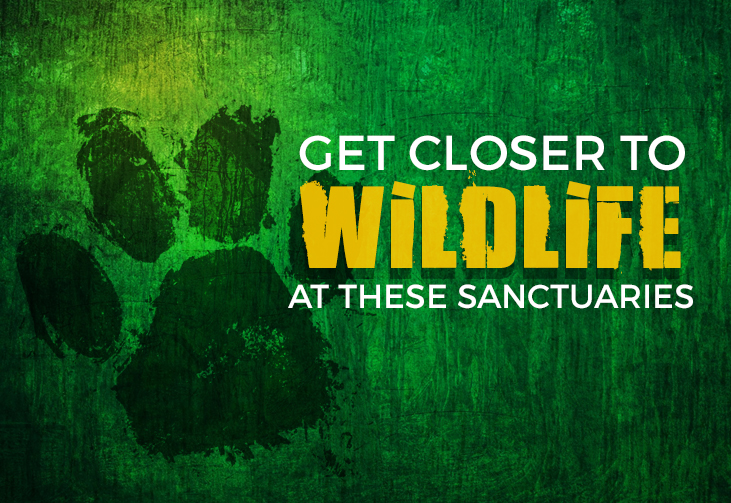 Get closer to Wildlife at these Sanctuaries