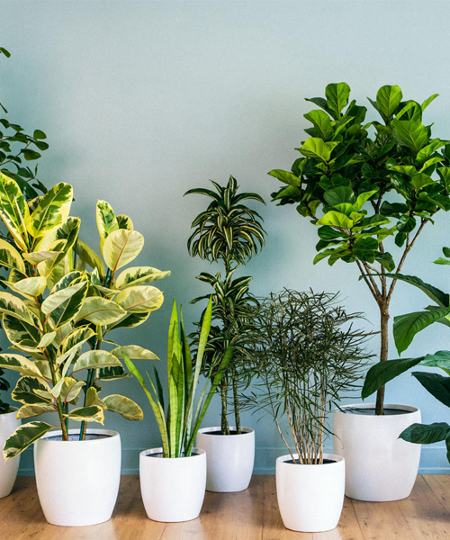 Go Green: Your Eco-friendly home décor guide