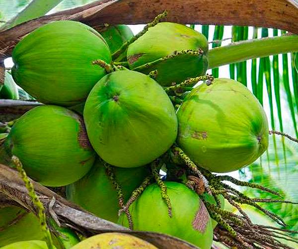World Coconut Day!