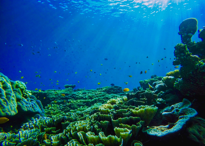 World Oceans Day: Because blue has always been cool